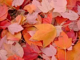 fall10.19.15