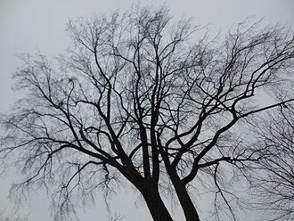 treeinwinter2.21